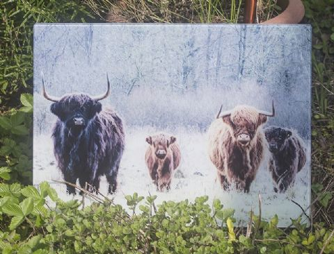 The Herd Highland Cow Glass Chopping Board Large Size Toughened Glass